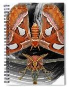 Atlas Moth8 Spiral Notebook