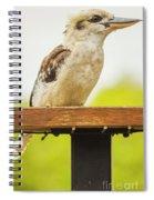Australian Kookaburra Spiral Notebook