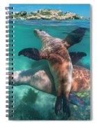 Australian Sea Lion Pair, Coral Coast Spiral Notebook