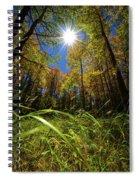 Autumn Forest Delight Spiral Notebook