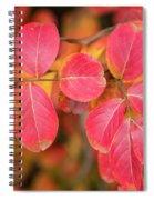 Autumnal Hues Spiral Notebook