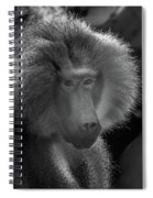 Baboon Black And White Spiral Notebook