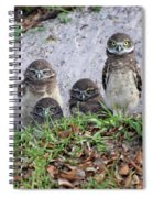 Baby Burrowing Owls Posing Spiral Notebook