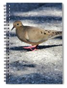 Baby Mourning Dove Spiral Notebook