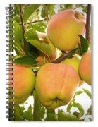 Backyard Garden Series - Apples In Apple Tree Spiral Notebook