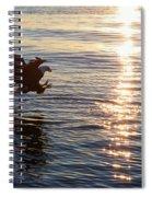 Bald Eagle At Sunset Spiral Notebook