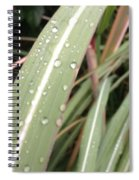 Bamboo And Water Spiral Notebook