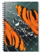 Banded Orange Butterfly. Spiral Notebook