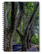 Bare Plane Tree Spiral Notebook
