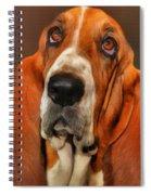 Basset Dog Portrait Spiral Notebook