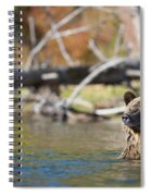 Bathing Blonde Grizzly Spiral Notebook