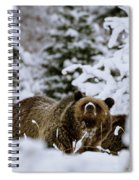 Bear In The Snow Spiral Notebook
