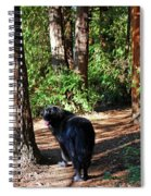 Bear In The Woods Spiral Notebook