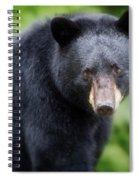 Bear Stare Spiral Notebook