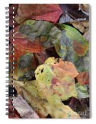 Beauti Fall Spiral Notebook