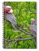 Beautiful Galah Birds With Babies. Wilsons Promontory National Park, Australia Spiral Notebook