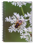 Bee Relaxing On A Flower. Spiral Notebook