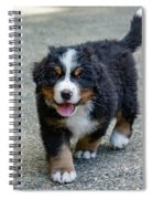 Bernese Mountain Dog Puppy 2 Spiral Notebook