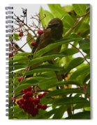 Berries And Waxwing Spiral Notebook