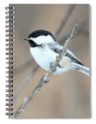 Black-capped Chickadee In Spring Spiral Notebook