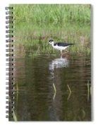 Black-necked Stilt 2018-1 Spiral Notebook