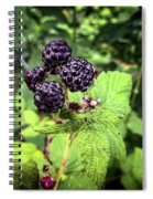Black Raspberries  Spiral Notebook