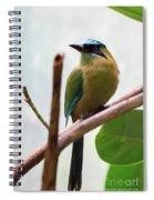 Blue-crowned Motmot Spiral Notebook