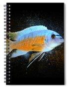 Blue Mbuna Cichlid Spiral Notebook