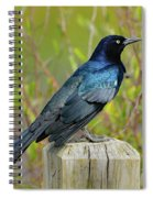 Boat Tailed Grackle Spiral Notebook