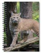 Bobcat Spiral Notebook