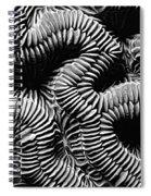 Brain Coral In Macro Bw Spiral Notebook
