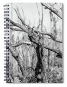 Branches In Black And White Spiral Notebook