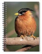 Bright Eye Spiral Notebook