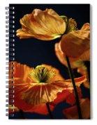 Bright Orange Poppies Spiral Notebook