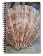 Brown Cockle Shell And Driftwood 2 Spiral Notebook