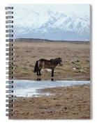 Brown Icelandic Horse In Profile Near Stream Spiral Notebook