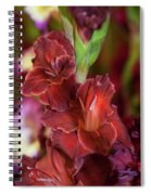 Brown Jewel 5. The Beauty Of Gladiolus Spiral Notebook