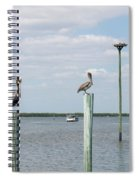 Brown Pelicans On Pilings And An Osprey Nest In The Tarpon Bay A Spiral Notebook