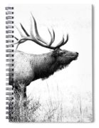 Bull Elk In Rut Spiral Notebook