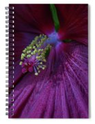 Burgundy Hibiscus Spiral Notebook