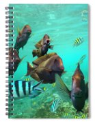 Butterflyfish And Sergeant Major Spiral Notebook