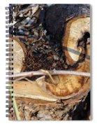 Canal Stumps-017 Spiral Notebook