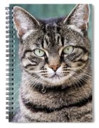 Cat Posing For The Camera. Spiral Notebook
