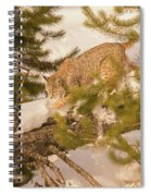 Cat Walk Spiral Notebook