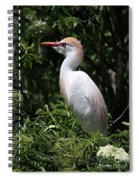 Cattle Egret With Breeding Feathers Spiral Notebook
