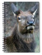 Caught With A Mouthful Spiral Notebook