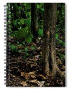 Cedar Trees Spiral Notebook