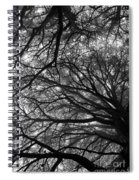 Cedars In The Mist Spiral Notebook