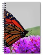Celebrate Goodness Spiral Notebook