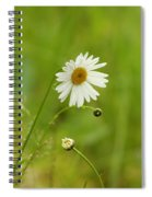 Chamomile Or Daisy? Spiral Notebook